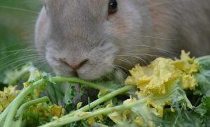 Woman Cannot Survive On Rabbit Food Alone