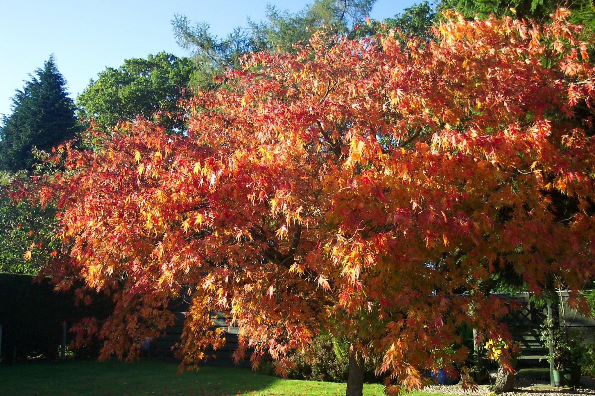 Preparing For Autumn In Scotland